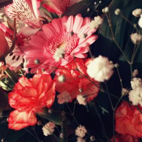 【編集長これどうですか?】第6回 道端の花の名前もわかるかも…?な方法