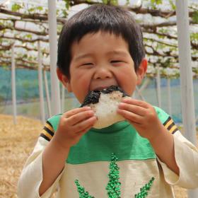 大人の1位はツナマヨ…子どもは?「好きなおにぎりの具材TOP5」調査