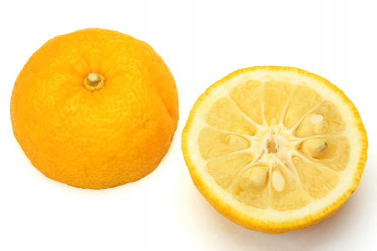 柚子 冷凍保存 方法