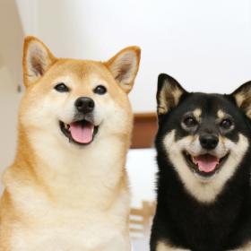 犬派or猫派どっち? 根強い人気の「犬」エピソードと愛される理由