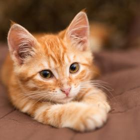 今日は「猫の日」!ねこブーム&愛される理由を飼い主エピソードから探ります
