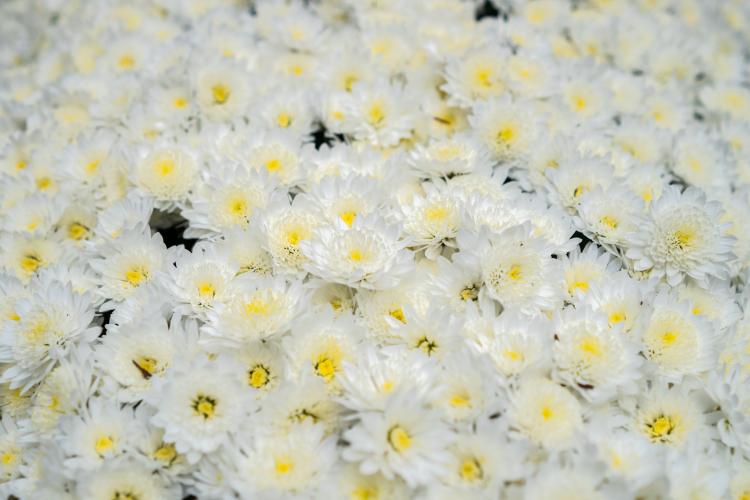 葬儀 供花
