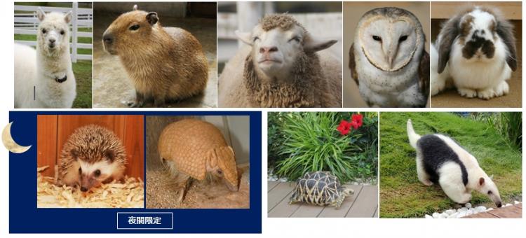 アルパカもカピバラも!「もふもふ動物」がGWのサンシャイン水族館に大集合