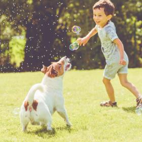 飼うならどんな子?「犬の種類と性質」10グループを3タイプに分けて解説<後編>【ペット雑学帳】vol.2