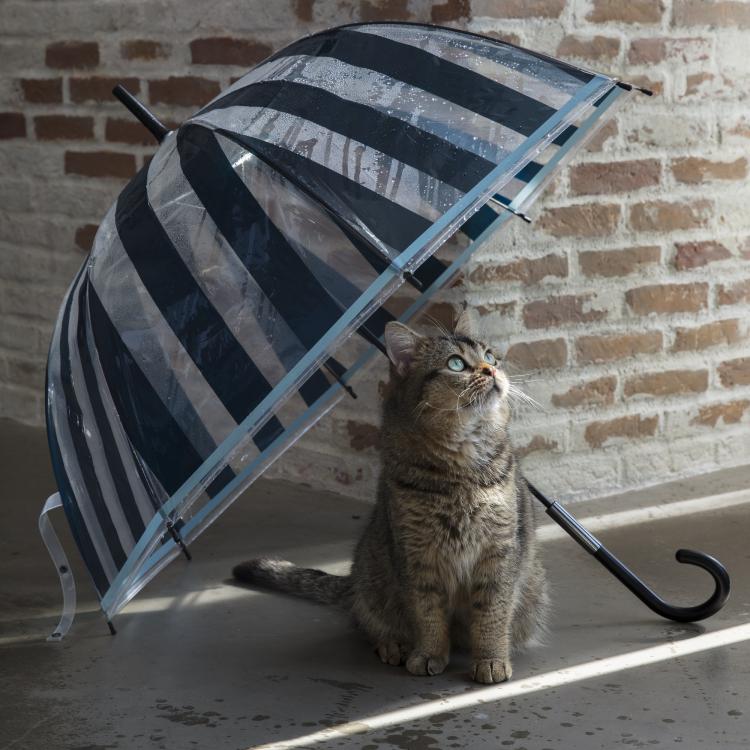 可愛くおしゃれな「ビニール傘」が欲しかった!Francfrancの2018新作レイングッズ