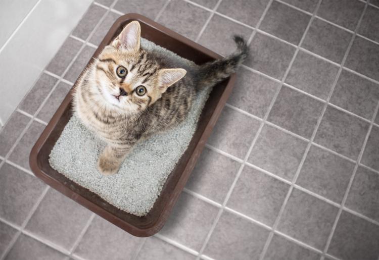 重曹 消臭 猫用トイレ