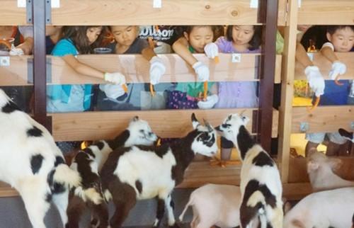 自由研究これから?都会のど真ん中で「酪農体験」Miracle Kids Otemachi