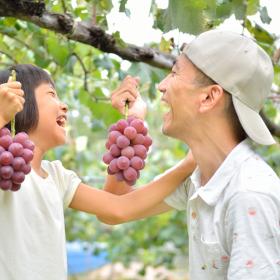 おいしいシーズン到来!3位は梨「行ってよかった果物狩り」289人が選ぶ大満足の1位は?