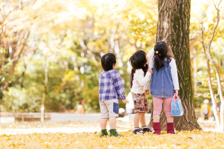 黄金色の森はちょっぴり不思議で…?「ドキドキする秋の絵本」【絵本ナビ編集長select 10月】