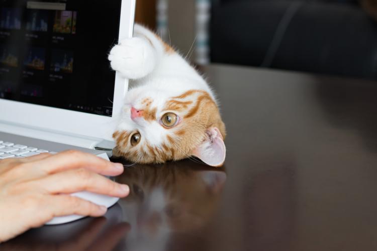 2月22日は猫の日「えっ、うちの子だけ!?」クスッと笑える愛猫のおかしな癖