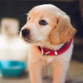 実は犬も肩がこってる⁉︎【イヌなで】マッサージは愛犬がとろける心地よさ!
