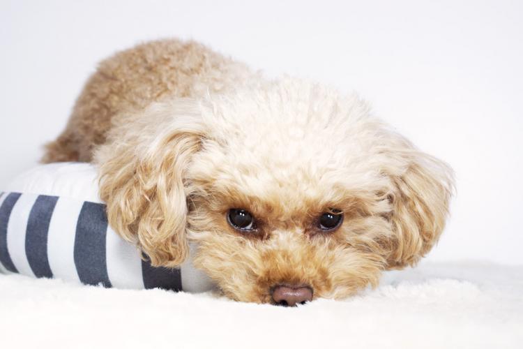 必需品からあると便利なものまで!「犬を迎える準備&必要なもの」【ペット雑学帳】vol.5