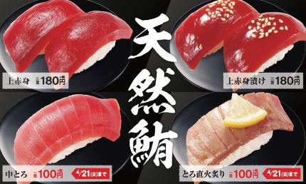 【明日10日から】天然鮪の中トロが1貫100円!かっぱ寿司が「天然鮪と春の旨いネタ」フェア開催