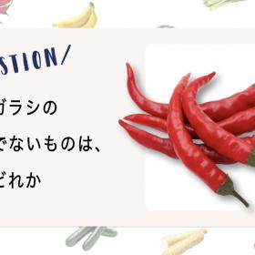 【野菜クイズ♯3】似てるけど…唐辛子一族じゃない野菜はどれ?