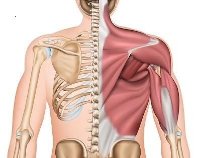 腰痛の原因は「腰」にはあらず!? フィジカルトレーナーが教える腰痛対策…ハムストリングや体幹トレーニングとの関係も