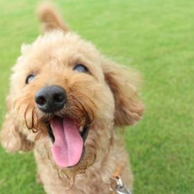 家族だけが見られるしぐさや表情!うちの犬のかわいすぎる「わんダフル」なエピソード集