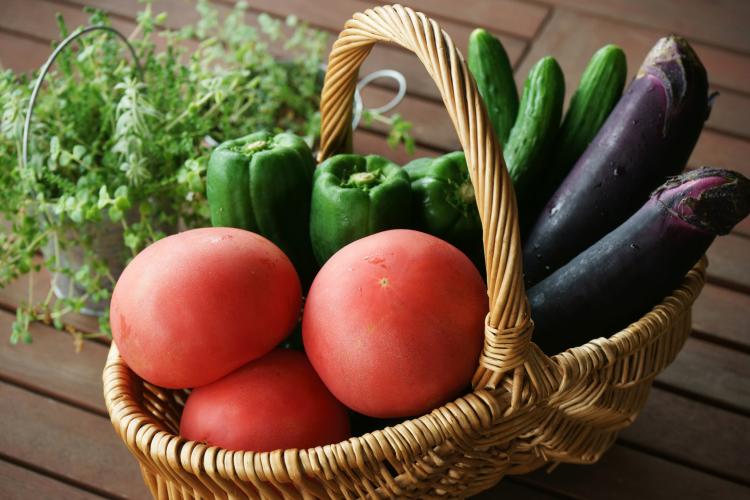 きゅうり、トマト、なす…「夏野菜の大量消費レシピ」家族がもりっと食べたメニューを集めました