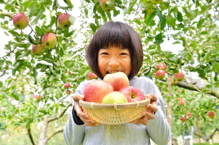 親子で楽しめる!行ってよかった「果物狩り」人気ベスト6…2位ぶどう、1位は?