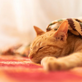 こたつの電源を入れるよう催促する猫まで!愛猫との冬のほっこりゴロゴロエピソード