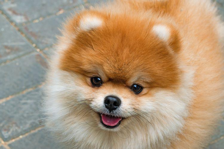 飼い主としては鼻高々!愛犬を褒められて「最高にうれしかった言葉」は…