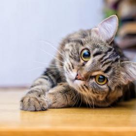 親バカと言われてもいいんです!愛猫を褒められて最高にうれしかった言葉とは