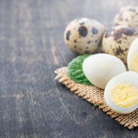 3位中華丼、2位スコッチエッグ!うずらの卵を使った人気レシピ…家族のテンションが上がる1位の料理は?