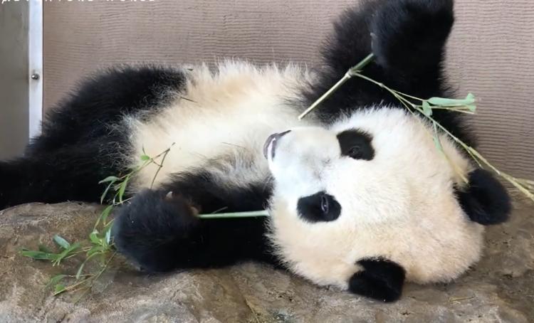おうちで水族館・動物園を楽しもう!おすすめYouTubeアカウント6選