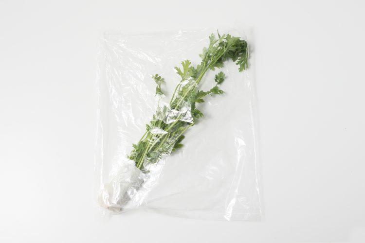 パクチー 冷蔵保存