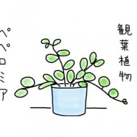 【4歳児あるある】わが家の観葉植物がすくすく育つ、そのワケは…