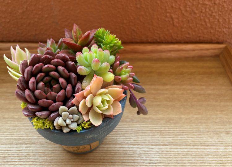 おうち紅葉が毎朝のお楽しみ!「多肉植物」がネオンカラーに色づいて可愛すぎる…【本日のお気に入り】