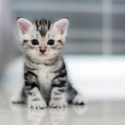 予想外の出来事の連発!「猫を飼い始めたばかりの頃」に起こったてんやわんやエピソード