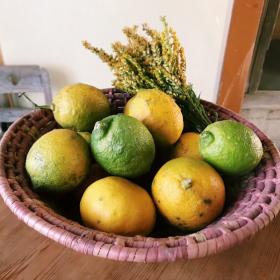 地元で収穫したレモンで作るレモン鍋やレモンケーキ【脱都会!野ざらし荘だより#4】