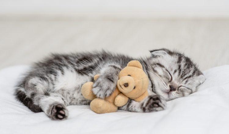 飼い主が振り返る…愛猫がまだ子猫だった頃にやっておけばよかったと後悔していること