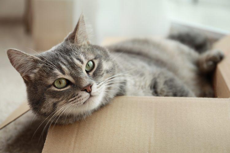 段ボール、お風呂場、窓とカーテンの間…えっ、そこがお気に入り!? 飼い主が驚いた「愛猫の好きな場所」