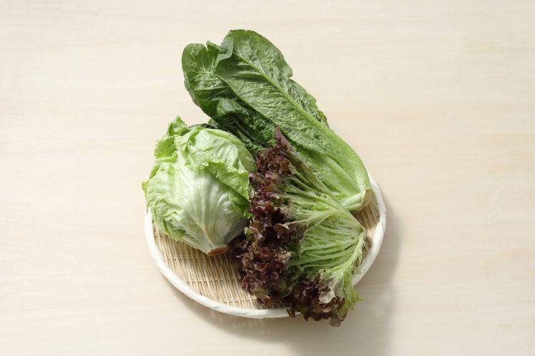 種類によってもけっこう違う!レタス類の栄養情報&おいしい食べ方や保存方法をご紹介【管理栄養士監修】
