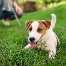 ライフスタイルや人間関係までポジティブに!犬を飼い始めて変わったこと