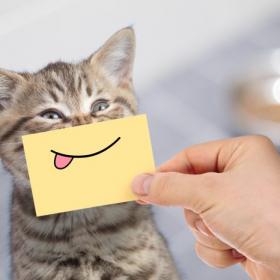 ん…?今「ごはん」ってしゃべった!? 愛猫に驚かされたエピソード