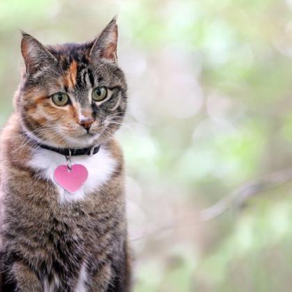 愛猫の名前の由来を教えてもらいました。好きなキャラクターと同じ、第一印象で決定も