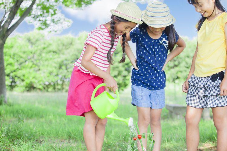 「水やりして!」と怒りたくない…子どもが植物や昆虫のお世話をするようになったきっかけは?