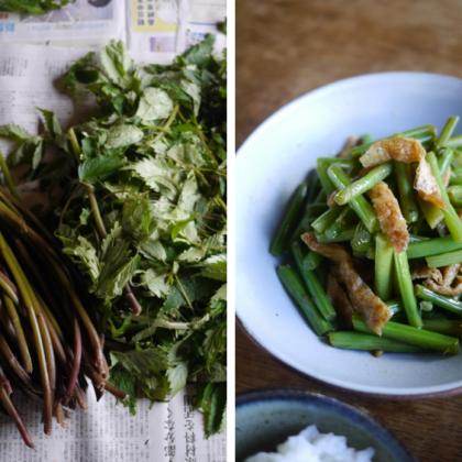 どっさり届いた秋の山菜は、出汁を効かせたこんなレシピで【お米農家のヨメごはん#61】